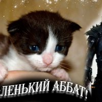 Наш маленький Аббат! :: Наталья (ShadeNataly) Мельник