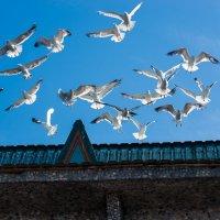 Желаю всем мирного неба над головой и родной земли под ногами! :: Ашот ASHOT Григорян GRIGORYAN