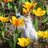 Потерялась средь тюльпанов красная девица... :: Tatiana Markova