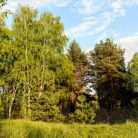 Spring forest :: Sergey Sergaj