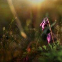Случайный цветок :: Михаил Александров