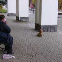 Бродячая  собака  в  Моршине :: Андрей  Васильевич Коляскин