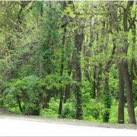 Изумрудные цвета мая... :: Тамара (st.tamara)