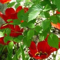 Цветы 2016 :: Наиля