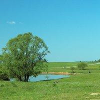 весна в беларуси :: Константин Гусаков