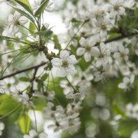 весна :: Алена Сухарева
