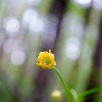 Весна :: Вера Кораблёва