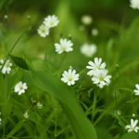 цветы :: Дмитрий Паченков