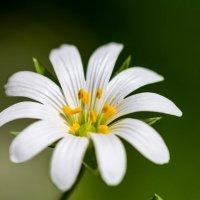 Цветок :: Дмитрий Носов