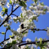 А за окном бушует месяц май :: Анастасия Прокопчук