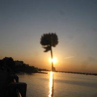 Солнечный хвост одуванчика :: Алекс Аро Аро