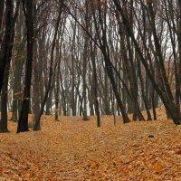 Голосеевский лес :: Сергей Рубан