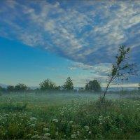 На лугах клязьминской поймы в восход. :: Igor Andreev