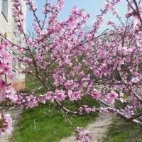 Весна красна :: Ирина Диденко