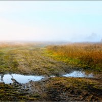 """Утром по дороге """"с глазами""""... :: Александр Никитинский"""