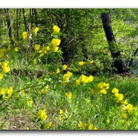 Цветы у реки. :: Чария Зоя