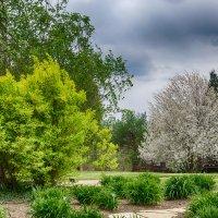 Ботанический сад в Праге :: Ольга Горбачева