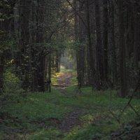 Дорога в лесу :: Константин Казенов