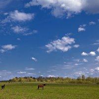 Белогривые лошадки... :: Татьяна Губина