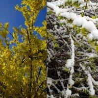 Последний привет от зимы. Разница снимка в одни сутки. Турин. Италия :: Наталья Пономаренко