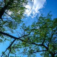 Деревья между облаками :: Сергей Тагиров