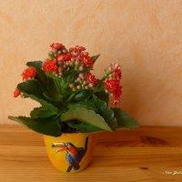 Цветы каланхое :: Nina Yudicheva