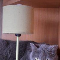 Кошка Малика. :: Лариса Красноперова