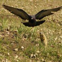 Эх,мне бы крылья... :: Светлана Винокурова
