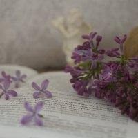Flowers :: Dar Milekin