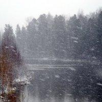 Майская вьюга, 11.05.2016 г. :: Наталья Пендюк Пендюк