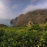 Весенние берега Крыма :: viton