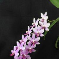 Цветик-семицветик :: Alis AN