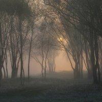 Рассвет в тумане :: Леся Вишня
