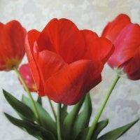 мои тюльпаны :: татьяна