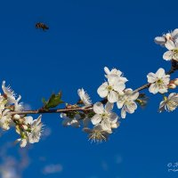 Весна :: Mikhail Andronikov