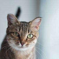 Кошка Ася :: Лекка