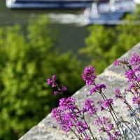 Цветы и камень :: Вальтер Дюк