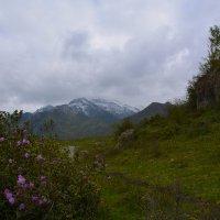 Цветы в горах. :: Валерий Медведев