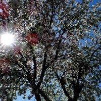 Солнце и цветы :: Olga Salnikova
