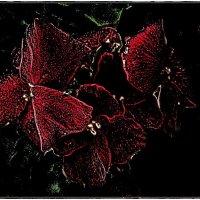 Загадочные цветы :: Нина Корешкова