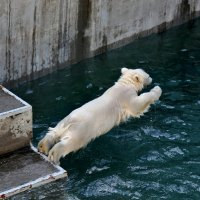 прыжок :: Аркадий
