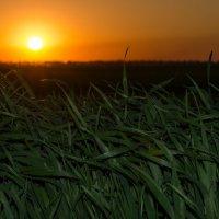 в нежных тонах заката,опускалось солнце на запад... :: Алексей -