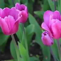 Цветы весны. :: Маргарита ( Марта ) Дрожжина