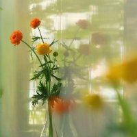 Цвета весны. :: Svetlana Sneg