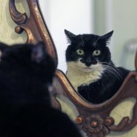 свет мой зеркальце... :: Александр Корнелюк