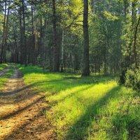 Лучистым звоном лес наполнив... :: Лесо-Вед (Баранов)
