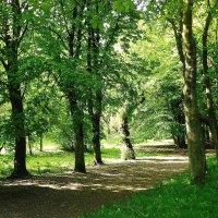 Аллеи парка пышут зеленью :: Маргарита Батырева