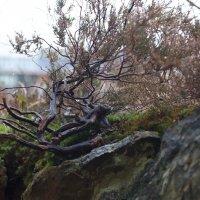 Полярное дерево :: Александр Павленко