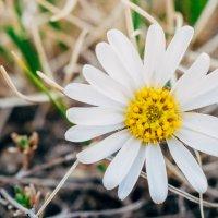 15.05.2016 Агинское, макро, цветы и бабочки :: Даба Дабаев
