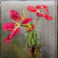 Танцующий под дождём. :: Мила Бовкун